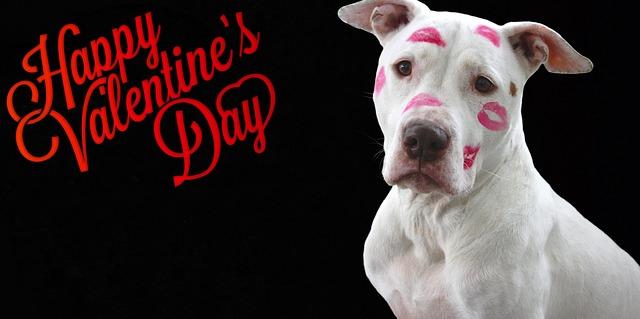 valentines-day-2034190_640