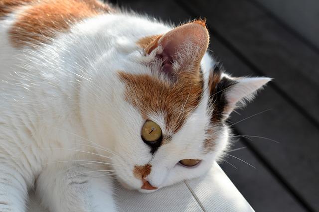 cat-1609555_640